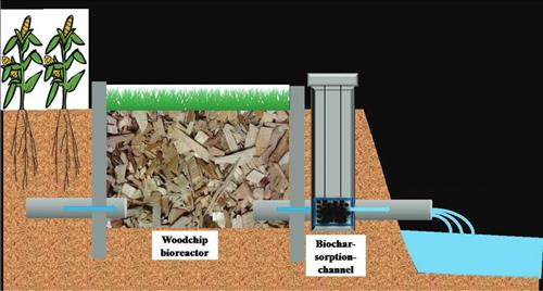 Specially designed biochar, seen lower right, would absorb phosphorus from tile drainage water filtered by a woodchip bioreactor. ISTC researcher Wei Zheng is studying special biochar as a water filter, which could be used as slow-release fertilizer. (Illustration by Wei Zheng, ISTC)