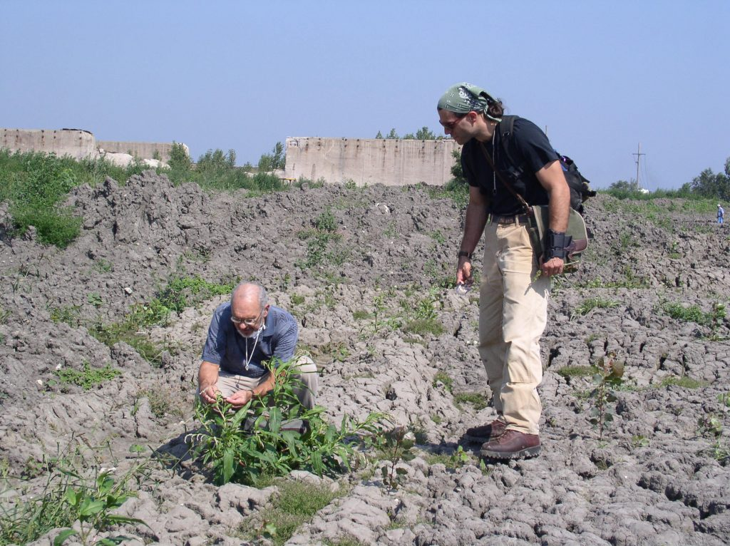 During the summer of 2004, botanists from the Illinois Natural History Survey identified plants growing in the placed sediment to determine if any non-native (invasive) species had been transported. The plants were all common to Illinois.